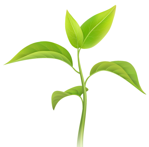 plant-growth-3-e1577734988146